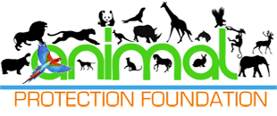 Animal Protection Foundation