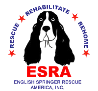 English Springer Rescue America